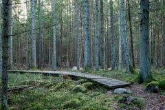 Alte hölzerne Promenade bedeckt mit Blättern im alten Wald Stockfotografie