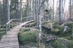 alte hölzerne Promenade bedeckt mit Blättern im alten Wald - vin Stockfotografie