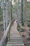 alte hölzerne Promenade bedeckt mit Blättern im alten Wald - vin Lizenzfreie Stockfotografie