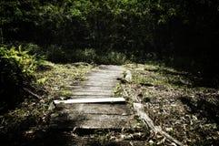 Alte hölzerne Promenade, die in dichte Wälder führt lizenzfreies stockfoto