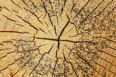 Alte hölzerne runde Hintergrundlichtbeige knackte viele Schläge verwitterte geometrisches Muster des rustikalen Basisentwurfs lizenzfreies stockbild