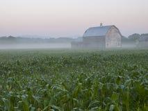 Alte hölzerne Scheune auf einem Mais-Gebiet an der Dämmerung Lizenzfreies Stockbild