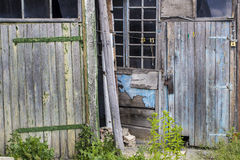 Alte hölzerne Türen und Fenster mit Anlage auf Wand Stockfoto