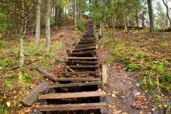 Alte hölzerne Treppe im Wald Stockbilder