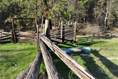 Alte Hürde im Wald Stockfotografie