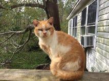 Alte halb-wilde Katze im Freien stockbild