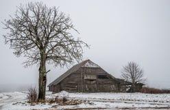 Alte Halle und bloßer Baum Stockfoto