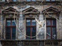Alte Haus-Fassade mit Affe-Skulptur in Berlin Lizenzfreie Stockfotos