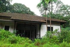 Alte Hausruine im tropischen Wald Stockfotografie