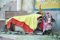 Alte heilige indische Kuh mit Dekorationen lizenzfreie stockfotografie
