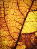 Alte Herbstbaum-Blattbeschaffenheit Stockfoto