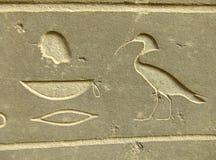 Alte Hieroglyphen auf ägyptischem Museum der Anzeigenaußenseite, Kairo Lizenzfreie Stockbilder