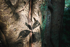 Alte Himalajabaumstruktur Stockbild