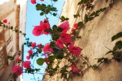 Alte historische Insel Malta Parks, Anlagen und Blumen Alte Stadt Lizenzfreie Stockfotografie