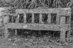 Alte Holzbank bedeckt in der Flechte und im Moos Stockbilder