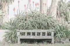 Alte Holzbank bedeckt in der Flechte und in Moos gestaltet durch blühende Agave stockbilder