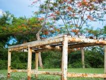 Alte Holzbank im Garten Stockfotografie