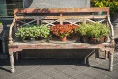 Alte Holzbank mit Blumen Stockbilder