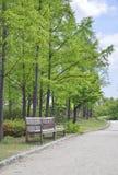 Alte Holzbank mit einem Hintergrund von hohen Bäumen Stockfoto
