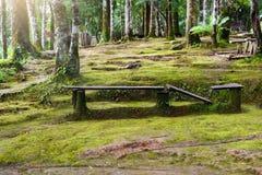 Alte Holzbank mit grünem MOS Stockbild