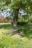 Alte Holzbank unter einem Baum Stockfotografie