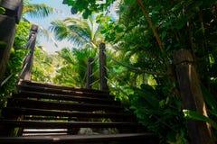 Alte Holzbrücke im tropischen Dschungel Kreuzung im Regenwald Stockbild