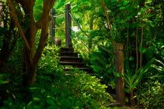 Alte Holzbrücke im tropischen Dschungel Kreuzung im Regenwald Lizenzfreie Stockfotos