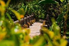 Alte Holzbrücke im tropischen Dschungel Kreuzung im Regenwald Lizenzfreie Stockfotografie