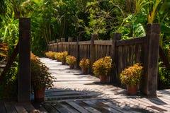 Alte Holzbrücke im tropischen Dschungel Kreuzung im Regenwald Stockbilder