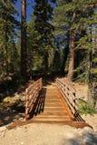 Alte Holzbrücke im Wald mit Sonnenschein stockfotografie