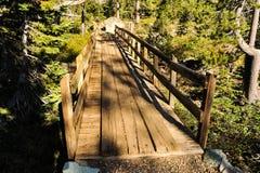 Alte Holzbrücke im Wald mit Sonnenschein lizenzfreie stockbilder
