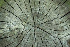 Alte Holzoberfläche mit Jahresringen, Sprüngen und Beschaffenheit Lizenzfreies Stockbild