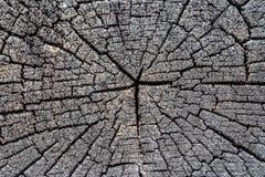 Alte Holzoberfläche mit Jahresringen, Sprüngen und Beschaffenheit Stockfoto