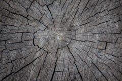 Alte Holzoberfläche mit Jahresringen, Sprüngen und Beschaffenheit Lizenzfreie Stockfotos