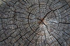 Alte Holzoberfläche mit Jahresringen, Sprüngen und Beschaffenheit Lizenzfreie Stockbilder