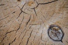 Alte Holzoberfläche mit Jahresringen, Sprüngen und Beschaffenheit Stockfotos