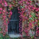 Alte Holztür überwältigt mit Efeu lizenzfreie stockfotografie