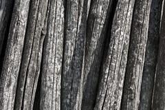 Alte Kabel der Akazie Lizenzfreies Stockfoto