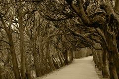 Alte kahle Bäume in einem Park Stockfotos