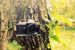 Alte Kamera, die an einem Baum hängt Stockfotos