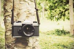 Alte Kamera, die an einem Baum hängt Stockbilder