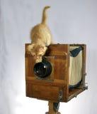 Alte Kamera und rotes Kätzchen Lizenzfreies Stockbild