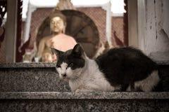 Alte Katze Stockfotos