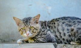 Alte Katze Lizenzfreies Stockbild