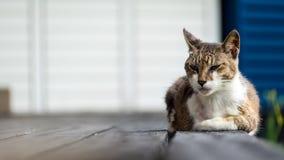 Alte Katze, die auf einem Bretterboden mit Unschärfehintergrund schläft Stockbilder