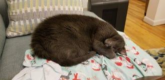 Alte Katze schlafend auf der Couch stockfoto