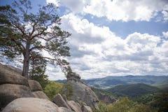 Alte Kiefer unter den großen Flusssteinen auf die Oberseite der Klippe agains Lizenzfreie Stockfotografie
