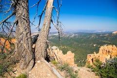 Alte Kiefern, die Bryce Canyon übersehen Lizenzfreies Stockfoto