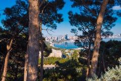 Alte Kiefern im Hochland parken, selektiver Fokus Stockbild