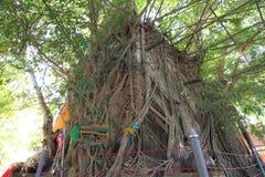 Alte Kirche des thailändischen Tempels im Baum Stockbilder